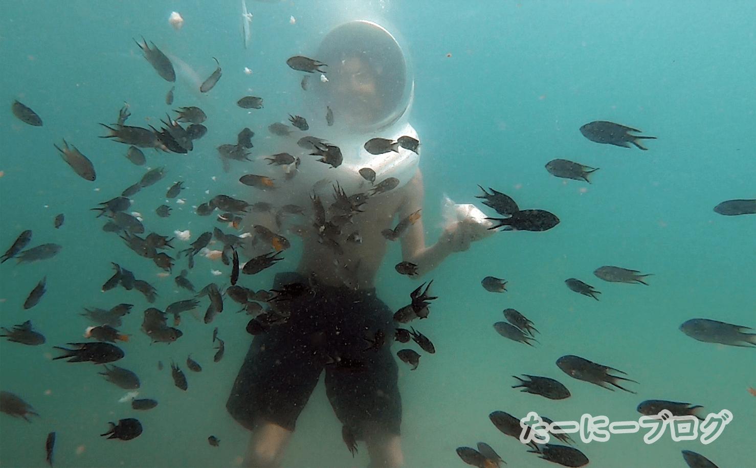 ラン島マリンパン魚